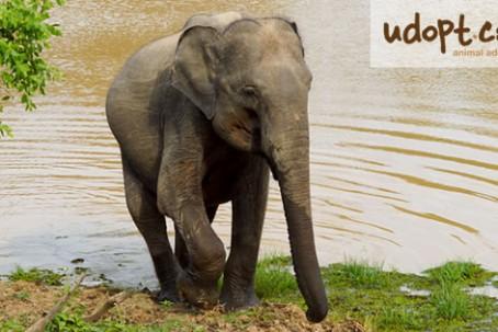 elephantFB