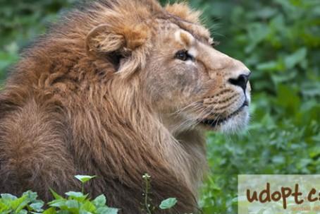 lionFB