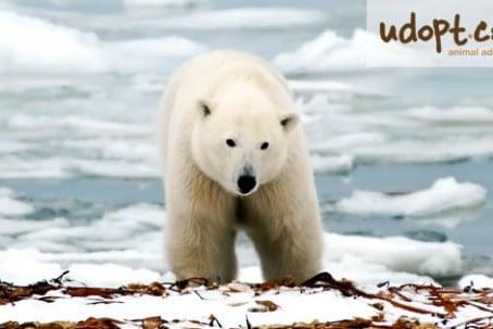 polarBearFB