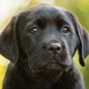 Sponsor a Puppy Robyn